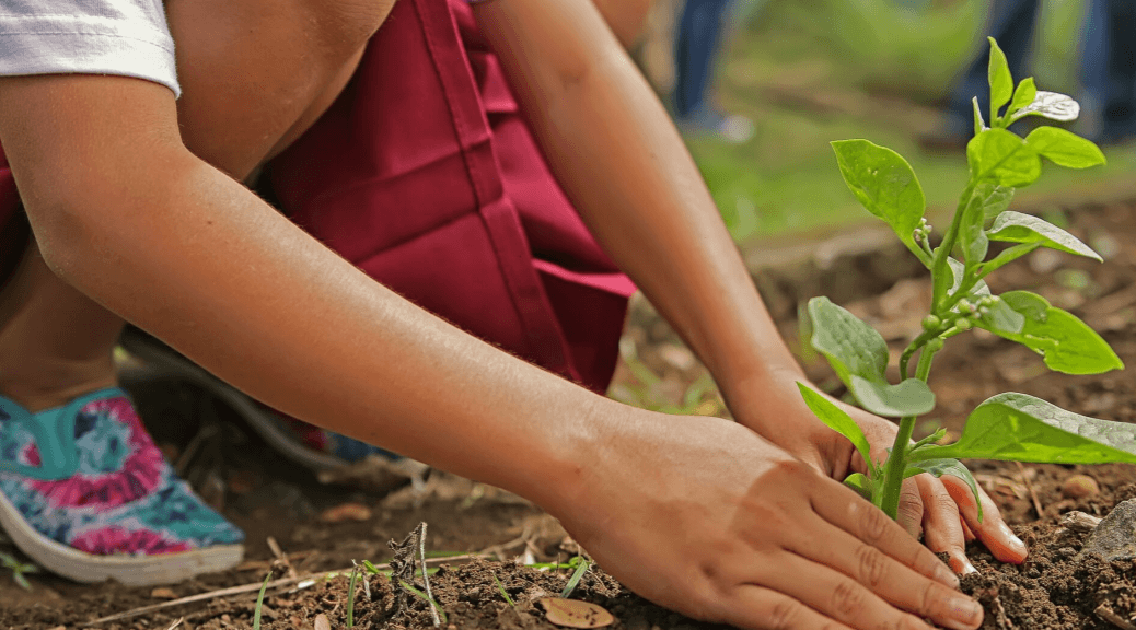 child plants flower; sustainable agriculture